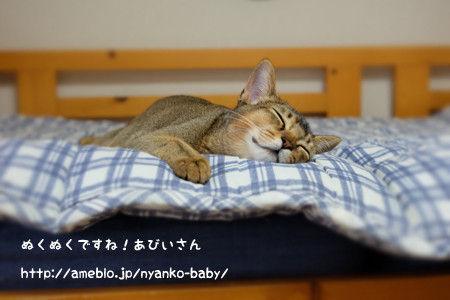 ぬくぬくして寝る猫