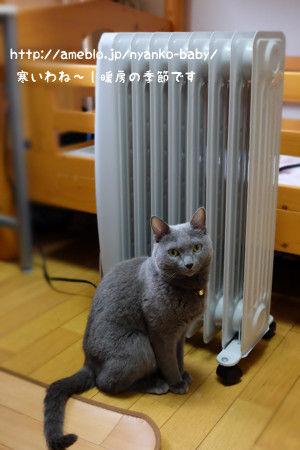 オイルストーブで温まる猫