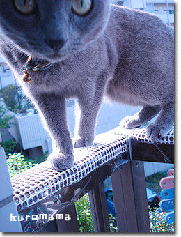 チチとママの気ままな節約日記-ベランダの猫