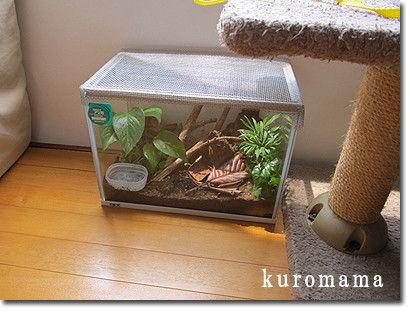 チチとママの気ままな節約日記-カナヘビ日光浴